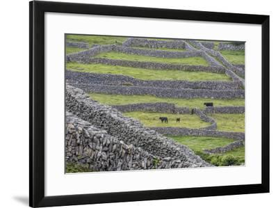 Rock Walls Create Small Paddocks for Sheep and Cattle on Inisheer-Michael Nolan-Framed Photographic Print