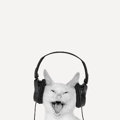 Rockin' Kitten-Jon Bertelli-Photographic Print
