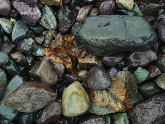 Rocks and Dead Leaves-Sam Abell-Photographic Print