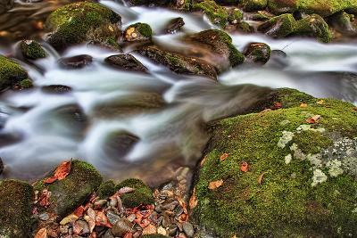 Rocks and Leaves-Bob Rouse-Photographic Print