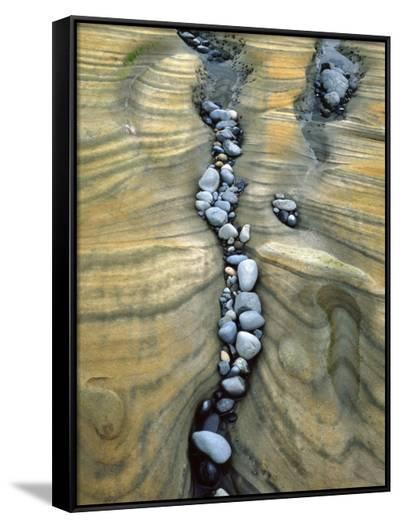 Rocks Caught in Sandstone Formations, Seal Rock Beach, Oregon, USA-Jaynes Gallery-Framed Canvas Print