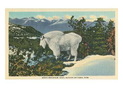Rocky Mountain Goat, Glacier Park, Montana--Art Print
