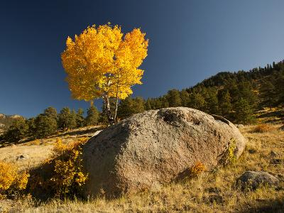 Rocky Mountain National Park Aspen, Colorado, USA-Patrick J^ Wall-Photographic Print