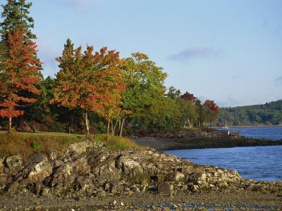 Rocky Shoreline and Trees at the Scenic Harbour, Bar Harbour, Maine, New England, USA-Amanda Hall-Photographic Print