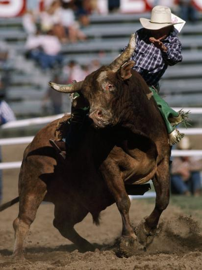 Rodeo Competitor in a Steer Riding Event-Chris Johns-Photographic Print