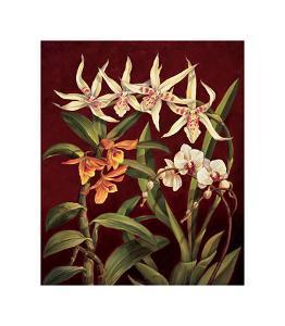 Orchid Trio I by Rodolfo Jimenez