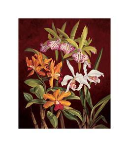 Orchid Trio II by Rodolfo Jimenez