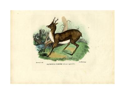 Roe Deer, 1863-79-Raimundo Petraroja-Giclee Print