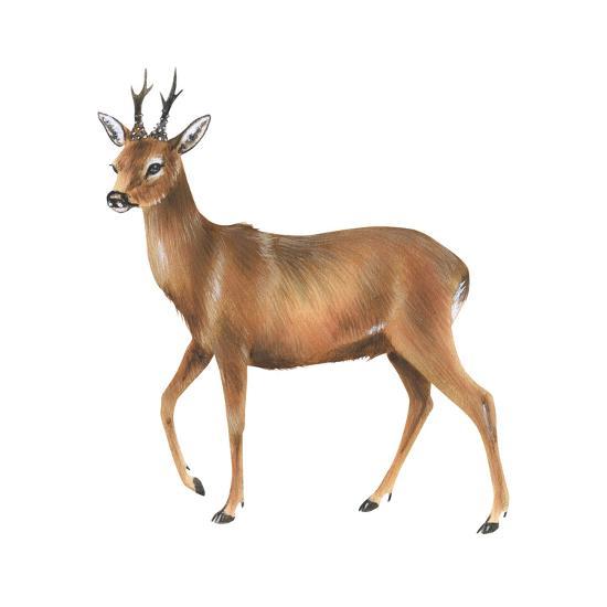 Roe Deer (Capreolus), Mammals-Encyclopaedia Britannica-Art Print