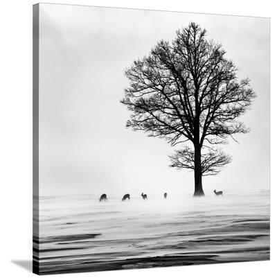 Roes--Stretched Canvas Print