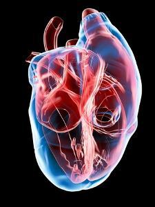 Human Heart, Artwork by Roger Harris
