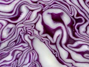 A Sliced Red Cabbage by Rogge & Jankovic