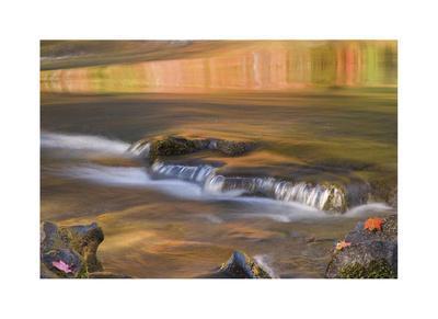 Rogue River Reflections II-Donald Paulson-Giclee Print