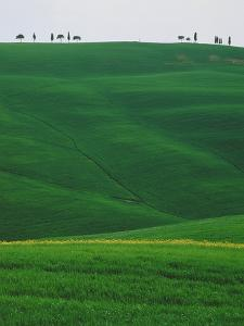 Meadows and cypresse in the Tuscany by Roland Gerth