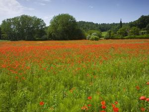 Poppy field, Chiusi, Italy by Roland Gerth