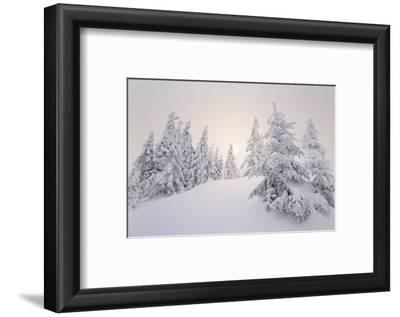Winter Landscape, Trees, Snow-Covered Series, Nature, Vegetation