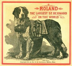 Roland the Largest St. Bernard in the World Trade Card