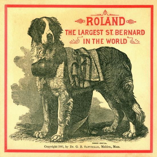 Roland the Largest St. Bernard in the World Trade Card--Giclee Print