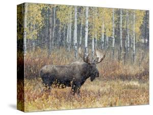 Beautiful Grand Teton National Park canvas artwork for sale, Photos