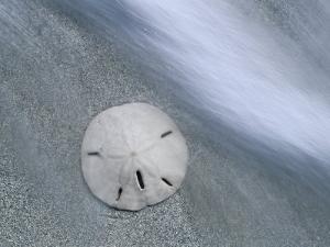 Keyhole Urchin, Sanibel Island, Florida, USA by Rolf Nussbaumer