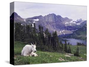 Goats Canvas Art Prints Paintings Posters Wall Art Art Com