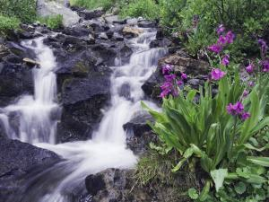 Waterfall and Wildflowers, Ouray, San Juan Mountains, Rocky Mountains, Colorado, USA by Rolf Nussbaumer