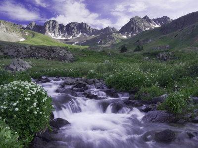 Wildflowers, Ouray, San Juan Mountains, Rocky Mountains, Colorado, USA