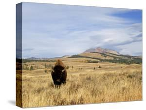 Yellowstone National Park, Wyoming, USA by Rolf Nussbaumer
