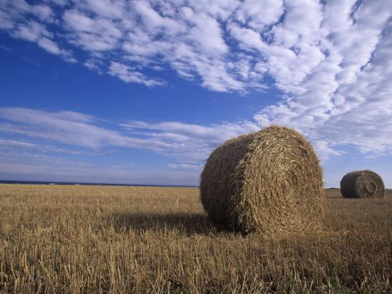 Rolled Hay Bales under a Blue Sky-Tim Hauf-Photographic Print