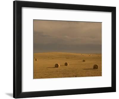 Rolled Up Bales of Hay in a Field Near Mud Butte, South Dakota-Phil Schermeister-Framed Photographic Print