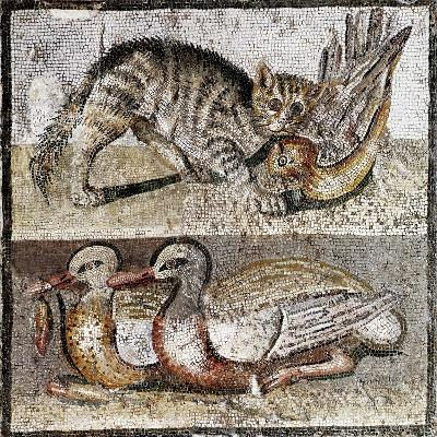 Roman Art : a Wild Cat Catching a Partridge and Two Ducks--Photographic Print