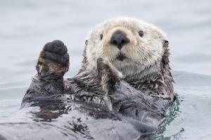 Yesterday I Caught A Fish Thiiis Big! Otter. Alaska by Roman Golubenko