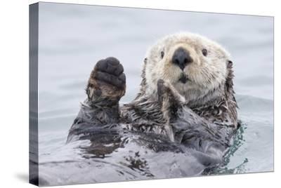 Yesterday I Caught A Fish Thiiis Big! Otter. Alaska