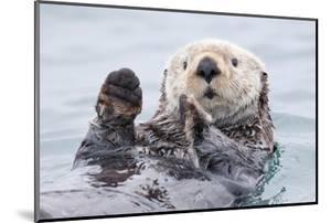 Yesterday I Caught a Fish Thiiis Big! - Otter. Alaska by Roman Golubenko