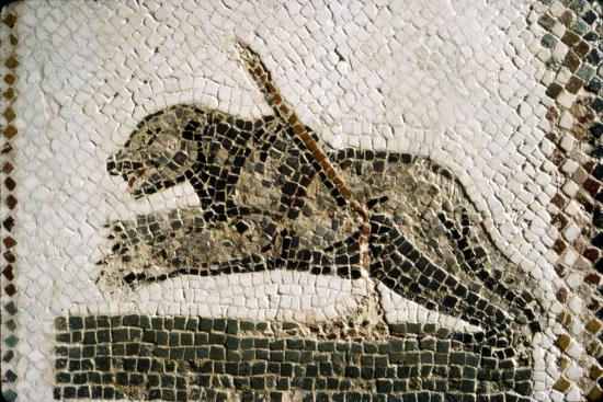 Roman Mosaic detail of Bear, from Diana the Huntress, Thuburbo Majus, Tunisia, c4th century-Unknown-Giclee Print