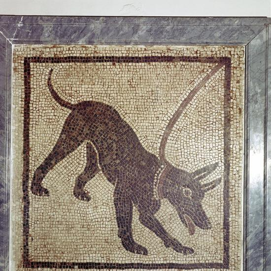Roman mosaic of dog, Cave Canem, Pompeii, Italy. Artist: Unknown-Unknown-Giclee Print