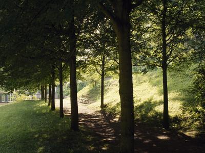 Trees at Bensheim, Staatspark Furstenlager - Germany