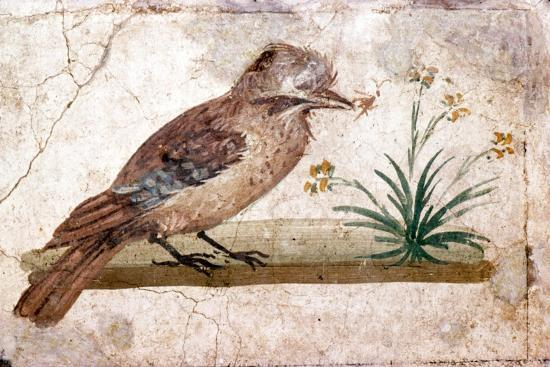 Roman wall painting of Jay from Boscoreale near Pompeii, 1st century-Unknown-Giclee Print