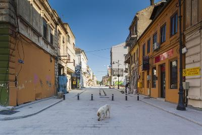 Romania, Constanta, Piata Ovidiu, Ovid Square, Street with Lone Dog-Walter Bibikow-Photographic Print