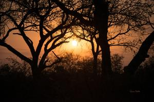 Africa Sunset by Romona Murdock