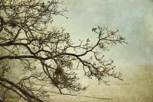 Branches by Romona Murdock