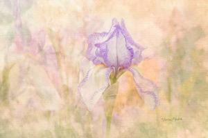 Iris in My Garden by Romona Murdock