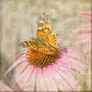 Tattered Butterfly by Romona Murdock
