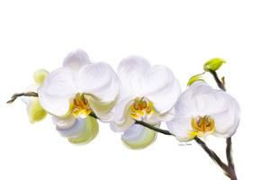 White Orchids by Romona Murdock