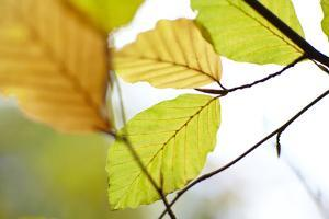 Close up of Autumn Leaves by Ron Bambridge