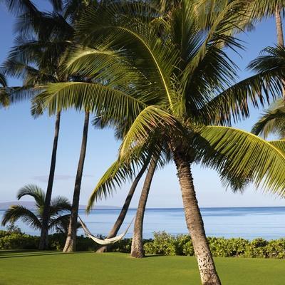 Hammock Between Two Palms