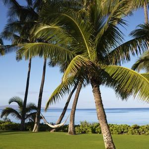 Hammock Between Two Palms by Ron Chapple