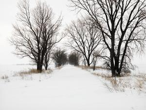 Trees and Drifted Road by Ron Chapple