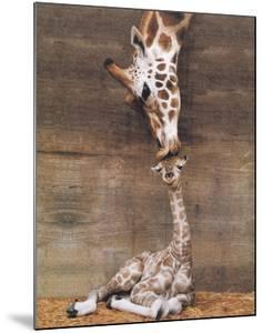 Giraffe, First Kiss by Ron D'Raine