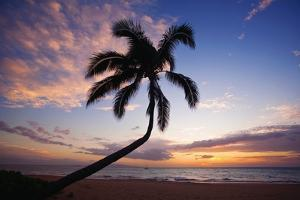 Coconut Palm Silhouetted at Sunset at Kamaole Beach Park in Hawaii by Ron Dahlquist